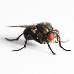 Flying INsect Control Glasgow