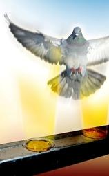 Installation of Bird Free Gel System