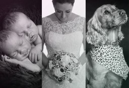 wedding, pet, newborn photography