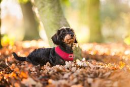 Outdoor dog portrait