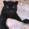 Panther Locksmiths
