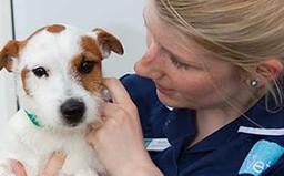 Quality pet care