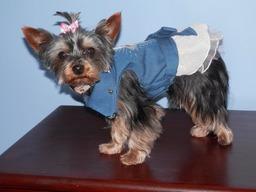 Designer dog dresses