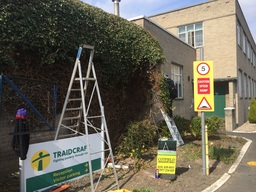 Ivy Removal Team Valley