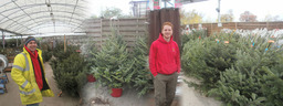 Christmas Trees at Sapcote Garden Centre