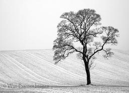 0083 Solitary Tree