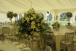 Img 0715 1  High Summer Marquee...Fresh and green!