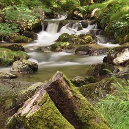 Dolgoch Falls North Wales