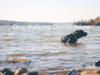 Dog Walking Dunfermline