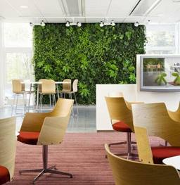 hedgedin artificial hedges and screening indoor