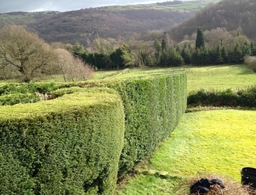 Completed Hedge Work
