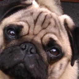 Dog Walker Clapham