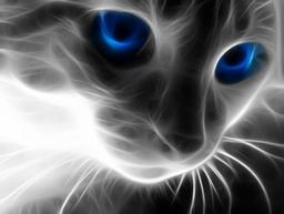 Wallpaper Cat Blue Eyes