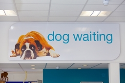 Separate dog waiting area