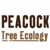 Peacock Tree Consultancy Ltd