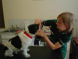Nurses carry out many clinics inclduing dental checks!!