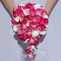 Hot Fuchsia Pink and Cream Calla Lily Teardrop Wedding Bouquet
