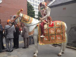 Our Indian Wedding Horse in Leeds