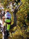 LTS Treework - Stockport tree surgeon