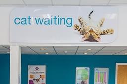 Separate cat waiting area