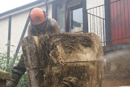 Cutting a large tree trunk
