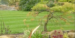 Garden Irrigation - Underground Popups