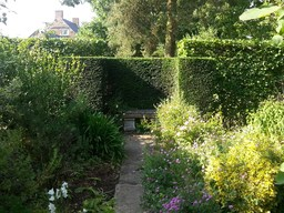 Nice Hedge Trimming Job