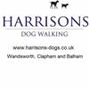 Harrison's Dogs