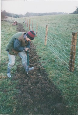 Planting a mixed native hedge