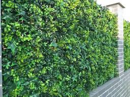 hedgedin artificial ivy leaf screening