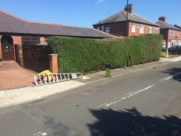 Hedge cutting from Cotfield