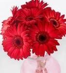 Beautifull Red Gerberas