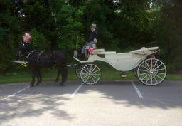 White open Carriage 2 white Horses for Wedding