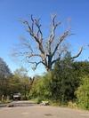 Ben Aldrich Tree Services