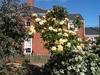 Carls gardening and handyman services