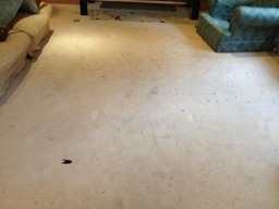 Carpet cleaner Kensington