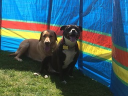 This is my dog Charlie and Pip on dog day care
