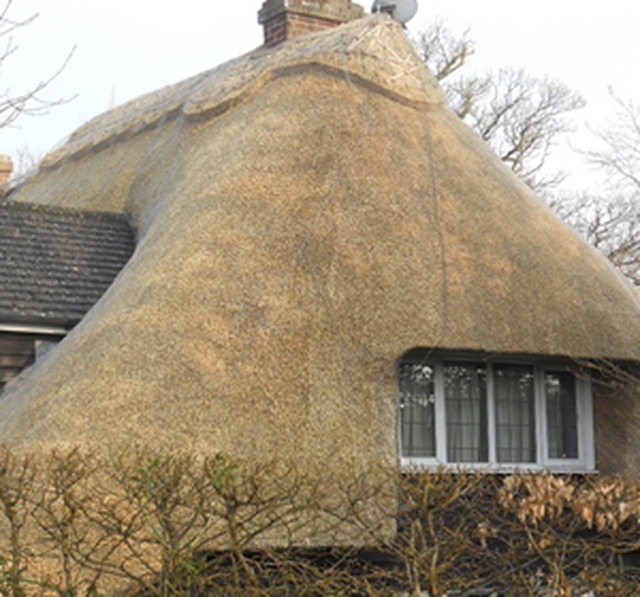 Details For Southern Counties Thatching Ltd In 70 Abberd