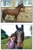 Yorkshire Equine & Pet Crematorium