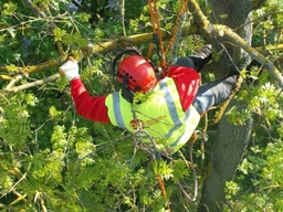 Tree Surgery Burton on Trent
