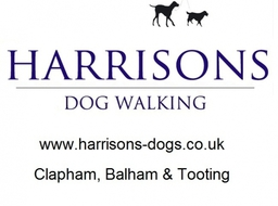 Clapham Dog Walker Clapham Common Clapham South Dog Walks Dog Walking Clapham