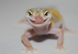 Reptile Pets with Character and Charm