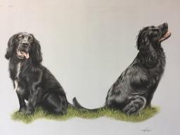 Springer Spaniel Pet Portrait Drawing