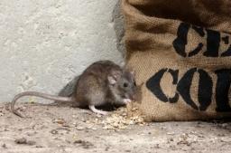 Pest control Dorset and Hampshire