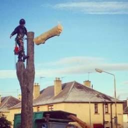 Tree removal Hinckley