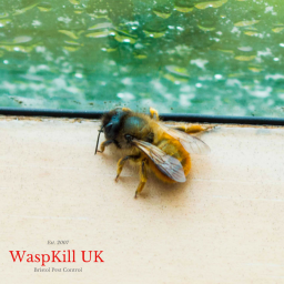 masonry solitary bees
