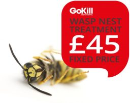 Manchester Wasp Nest Removal