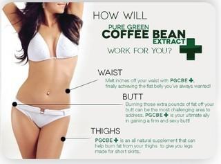 Green Coffee Beans Singapore Official Supplier Serangoon