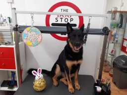 The Dog Stop - Dog Grooming Wivenhoe Colchester