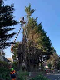 Edinburgh Tree Surgeon
